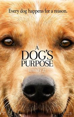 panfleto 'Quatro Vidas de um Cachorro'