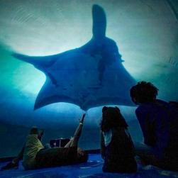 panfleto  Filme 360º 'Mergulho no Desconhecido' em um Oceanário