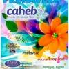 panfleto Festa da Primavera